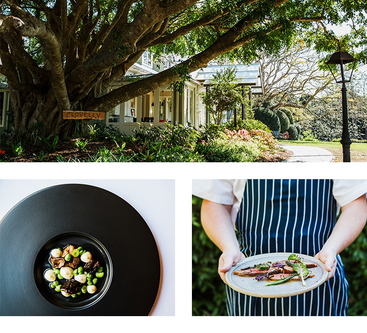 Spicers Clovelly Estate, The Long Apron