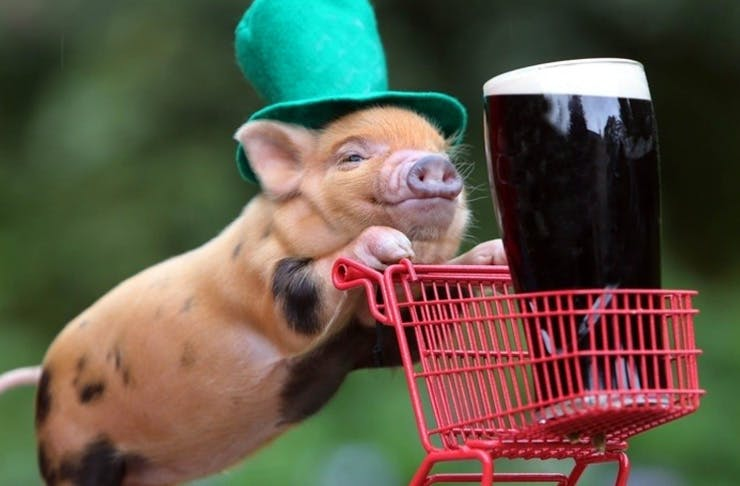 st patricks day, st patricks day auckland, what's on st patricks day 2016