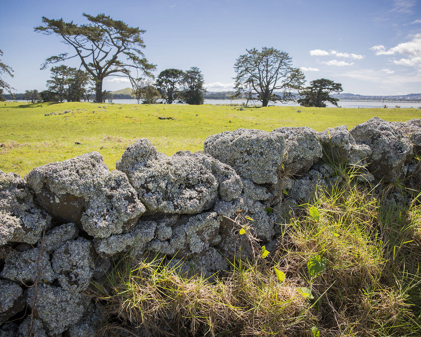 A view of Ōtuataua Stonefields.
