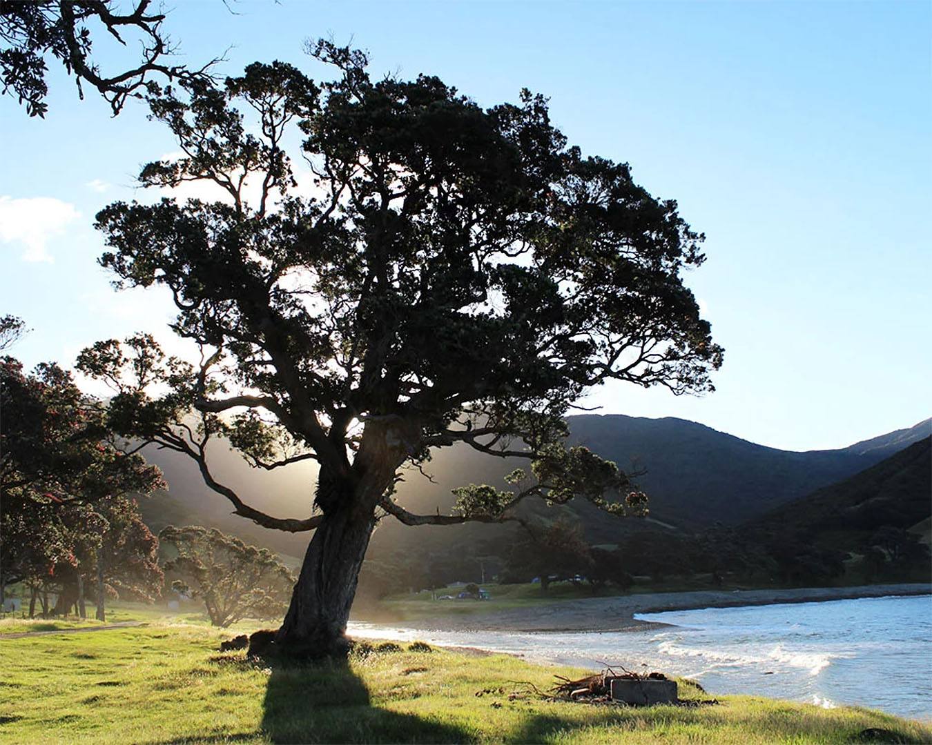 A lone tree at Stony bay, one of the best campsites on the coromandel.