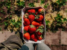 Gumboots On, Here's Where To Pick Strawberries On The Sunshine Coast