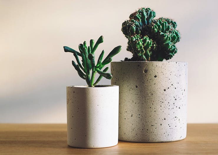 A Succulent Delivery Service Has Landed In Brisbane!