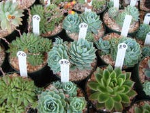 There's A HUGE Pop Up Plant Sale Coming To Perth