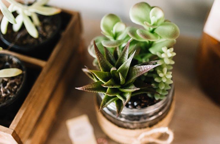 green folk plant stores gold coast