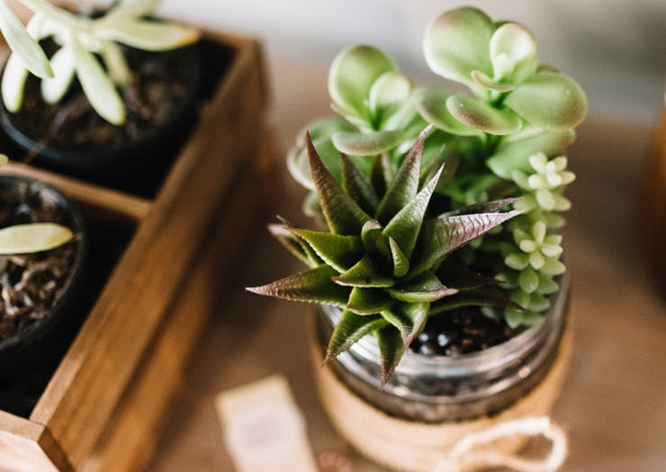 Psst… A Cute Laneway Plant Shop Is Coming To Burleigh!