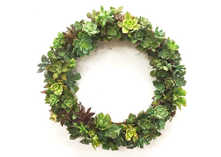 Succulent Christmas Wreaths Are Now A Glorious Reality