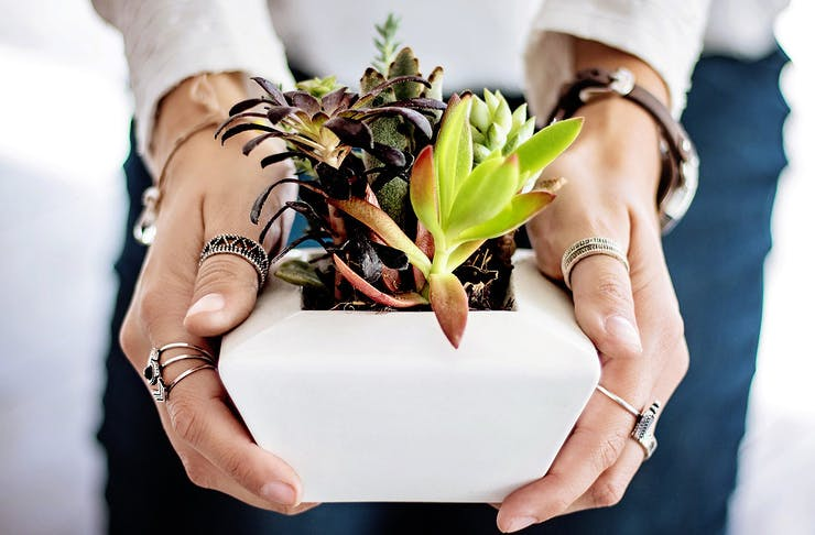 A person holds a small succulents in their hands.