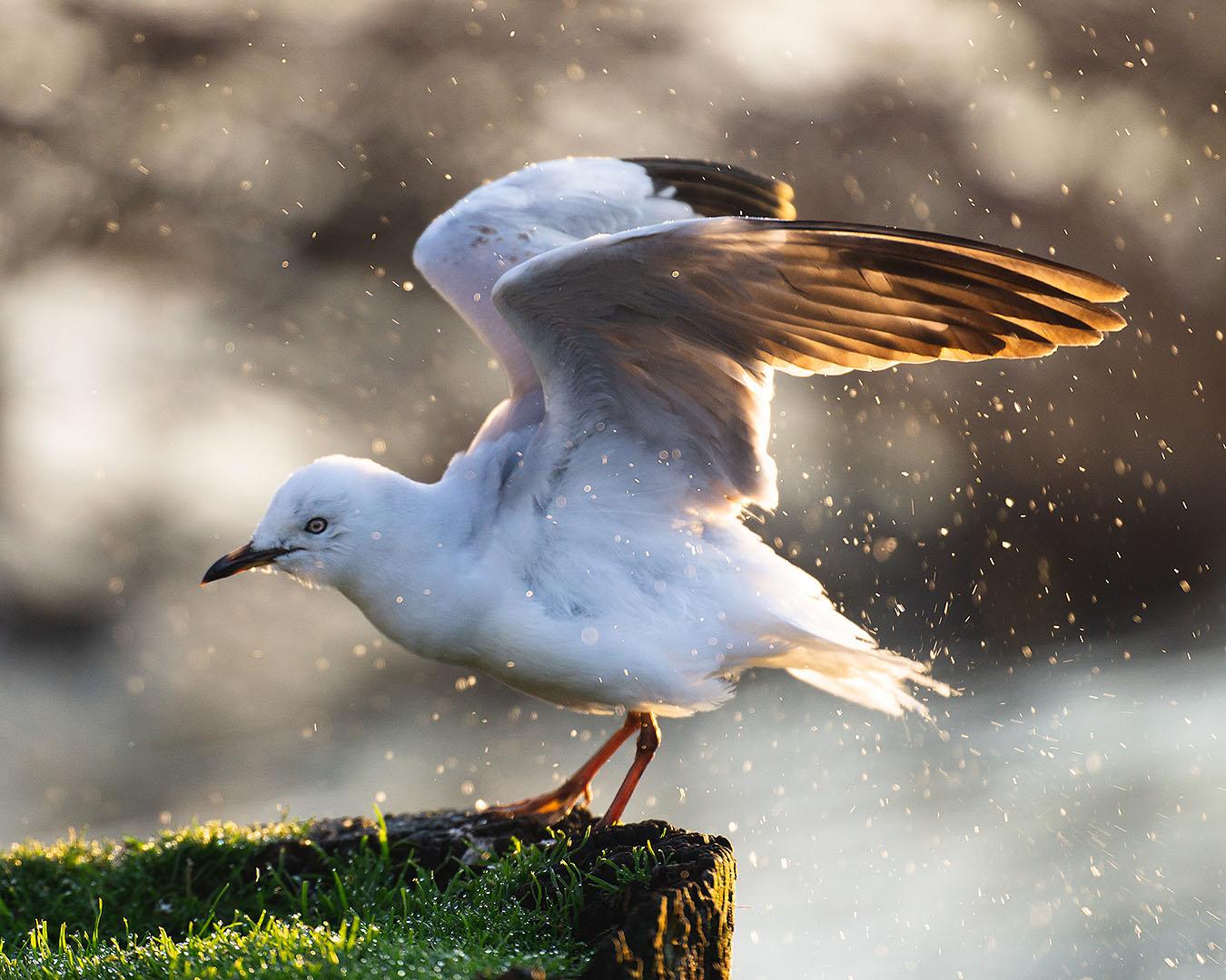 A native bird spotted at Rotorua's Sulphur Point.