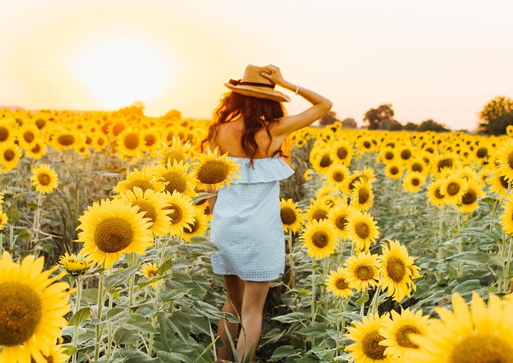 Take A Stroll Through The Flowers At This Colourful New Sunflower Festival