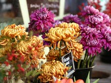 What In Carnation?! These Are Sydney's Best Florists