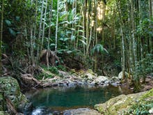 Buckle Up, Here's How To Have The Ultimate Road Trip To Tamborine Mountain
