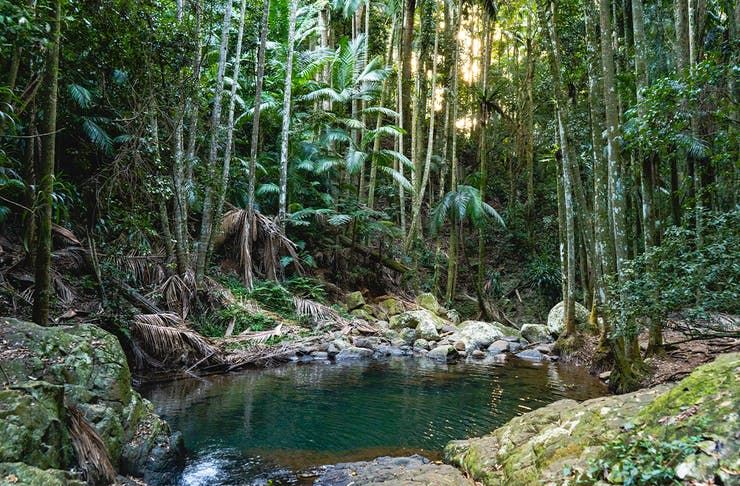 A creek running through a shady rainforest.