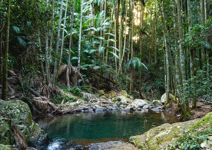 Here's How To Have The Ultimate Road Trip To Tamborine Mountain