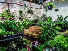 This Famously Huge Melbourne Plant Sale Is Popping Up In Brisbane