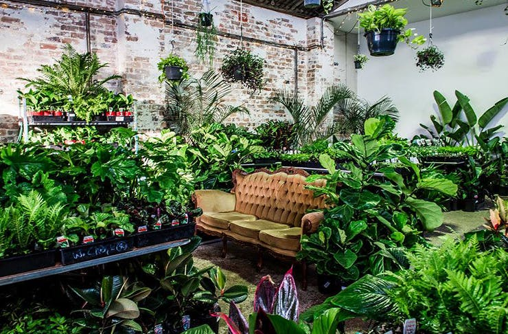 the-jungle-collective-plant-sale-brisbane