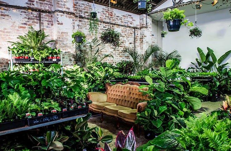the-jungle-collective-plant-sale-brisbane