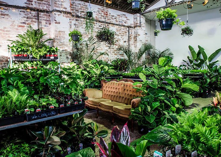 Melbourne's Famous Warehouse Plant Sale Is Popping Up In Brisbane Again