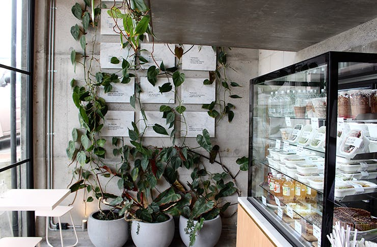 We've Found Auckland's Sweetest New Opening