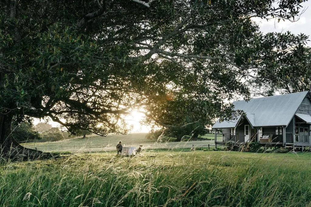 a cabin in a field under a massive fig tree