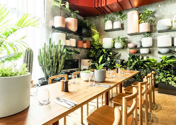 interior of a cafe with lots of plants