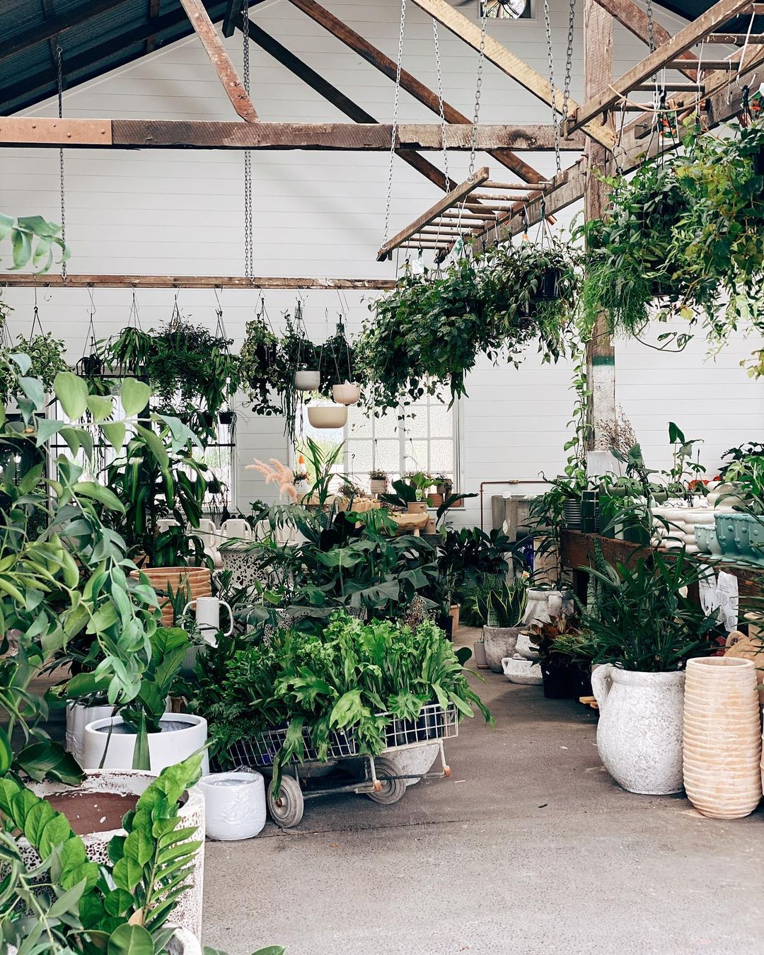 a warehouse style shop full of plants