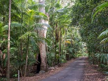Hop In The Car, Here Are All The Spots You Need To Check Out In The Gold Coast Hinterland