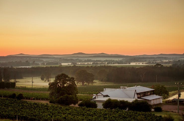 A view across the Hunter Valley vineyards at dusk.