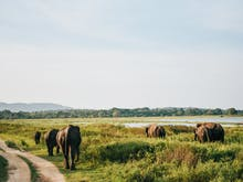 50 Things To Do In Sri Lanka