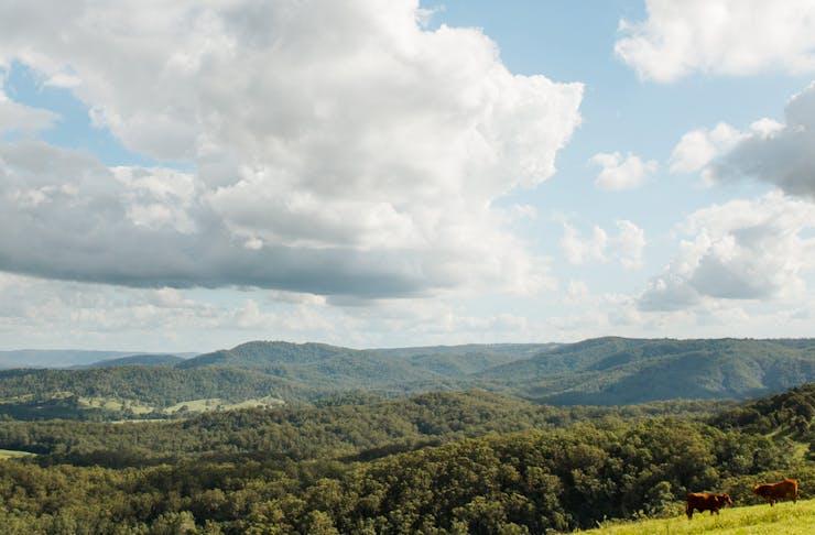 A panoramic view over the Sunshine Coast Hinterland.