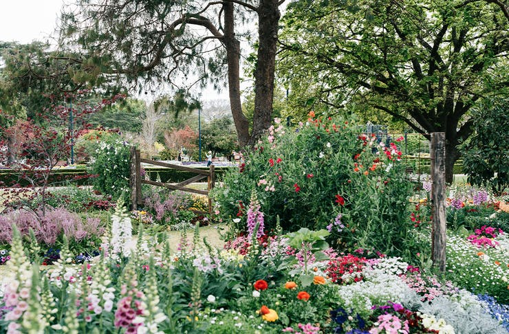 A garden full of blooming flowers