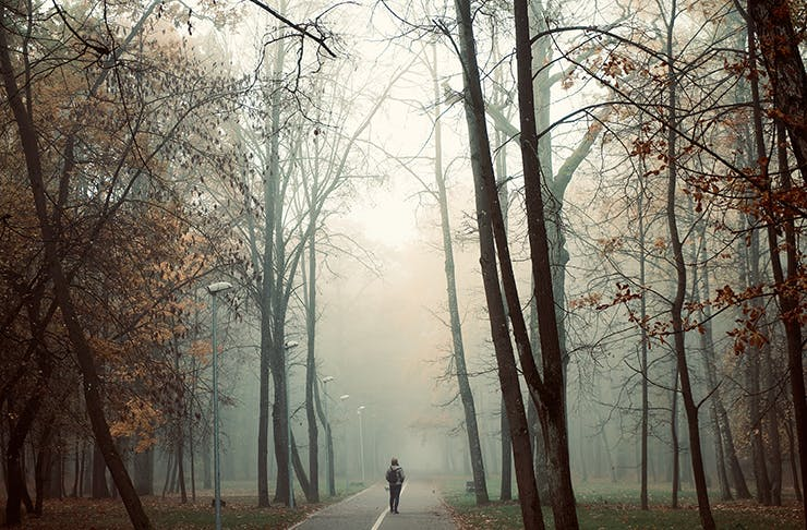 A person walking amongst tall trees with fog passing through the distance.