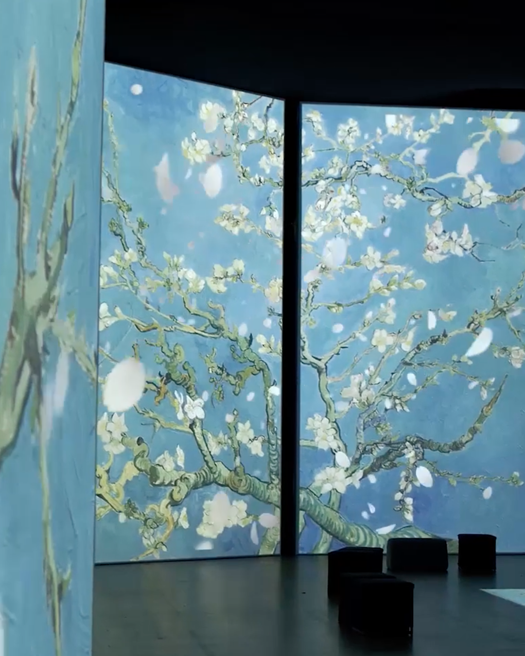 A photo from the Van Gogh alive exhibition showing the almond blossom paintings displayed on digital screens