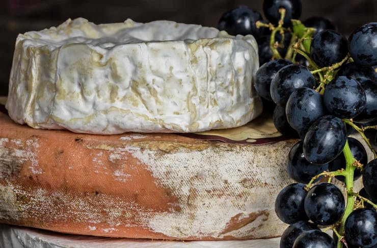 vegan-camembert-cheese