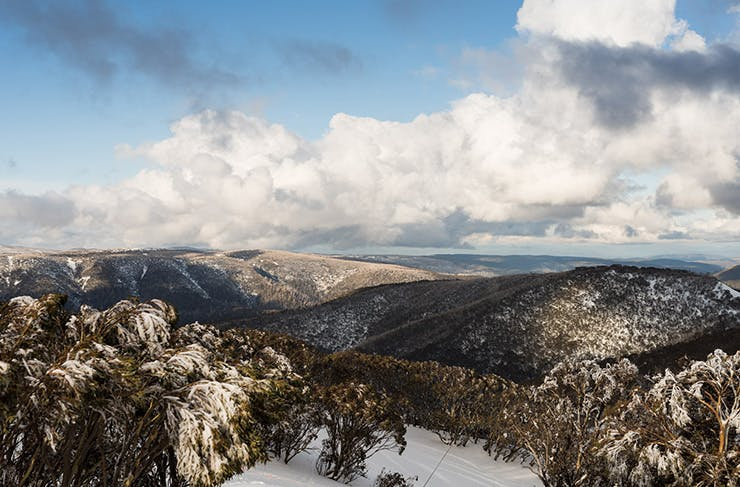 Everything Worth Eating, Seeing And Doing In Victoria's High Country