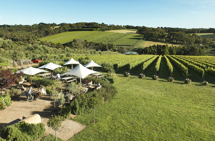 A view across the Montalto Vineyard in Red Hill, Victoria.