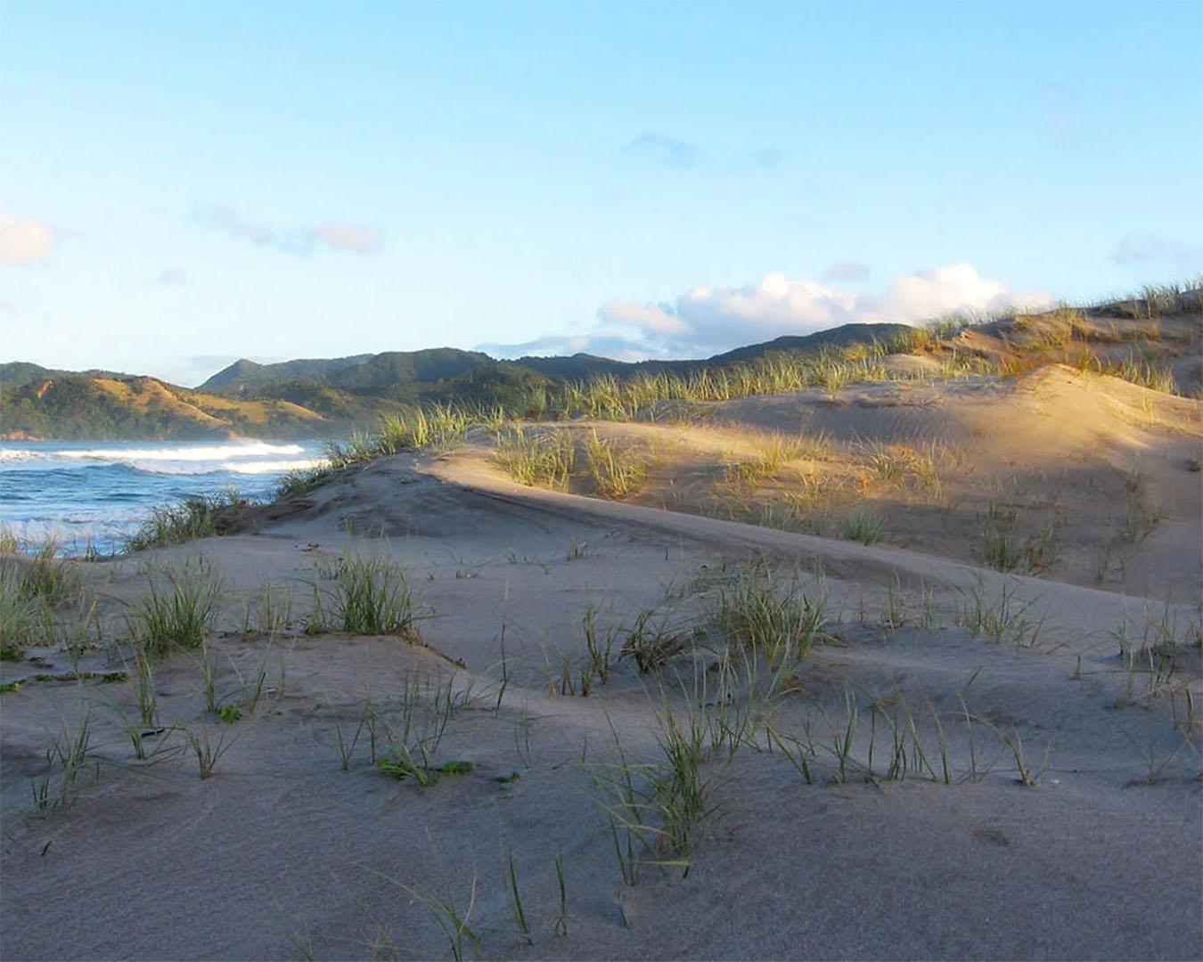 Waikawau bay sand dunes