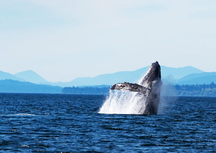 The Best Spots For Whale Watching In And Around Brisbane