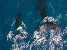 Where To Watch Whales Near Melbourne