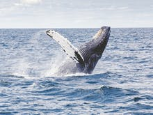 The Best Spots For Whale Watching Near Brisbane