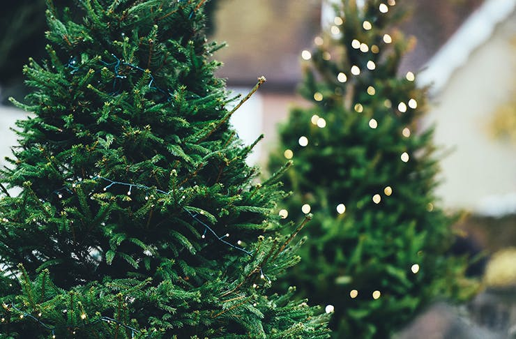 Where To Buy Christmas Trees In Auckland Auckland The Urban List