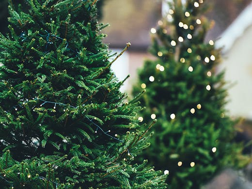 Christmas Trees Near Me.Where To Buy Christmas Trees In Auckland Urban List Nz