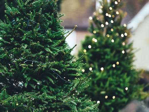 Don Henly Christmas.Where To Buy Real Christmas Trees In Perth Perth Urban List