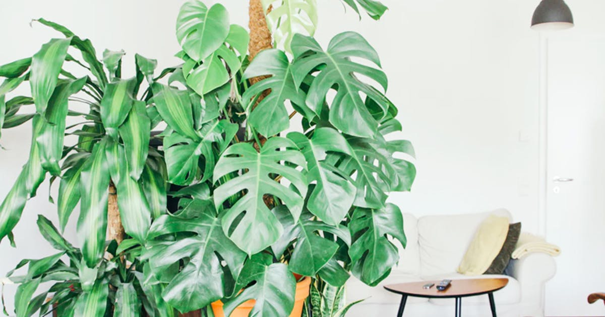 Where To Buy Indoor Plants In Sydney Sydney The Urban List