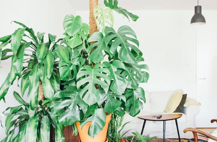 where to buy indoor plants in sydney sydney the urban list. Black Bedroom Furniture Sets. Home Design Ideas