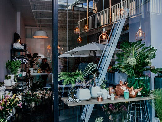 Where To Buy Succulents In Brisbane Urban List Brisbane