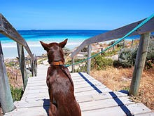 Where To Adopt A Pet In Perth