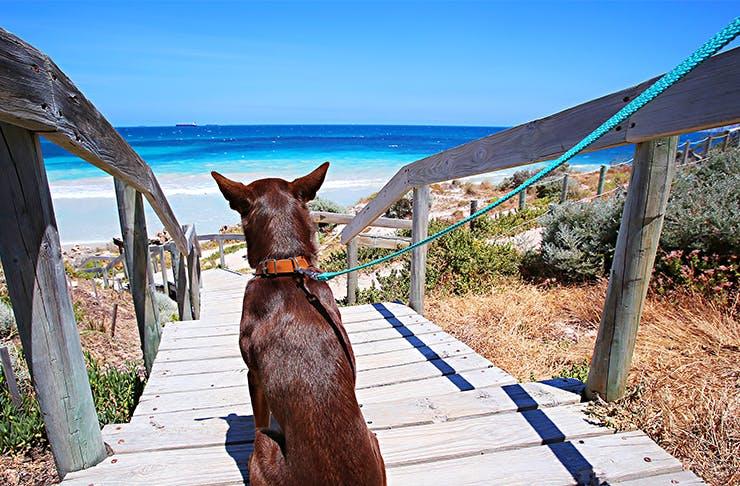 Where To Adopt A Pet In Perth | Perth | Urban List