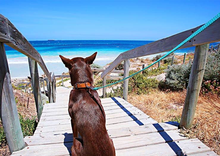 Get Yourself A Furry Friend, Here's Where To Adopt A Pet In Perth