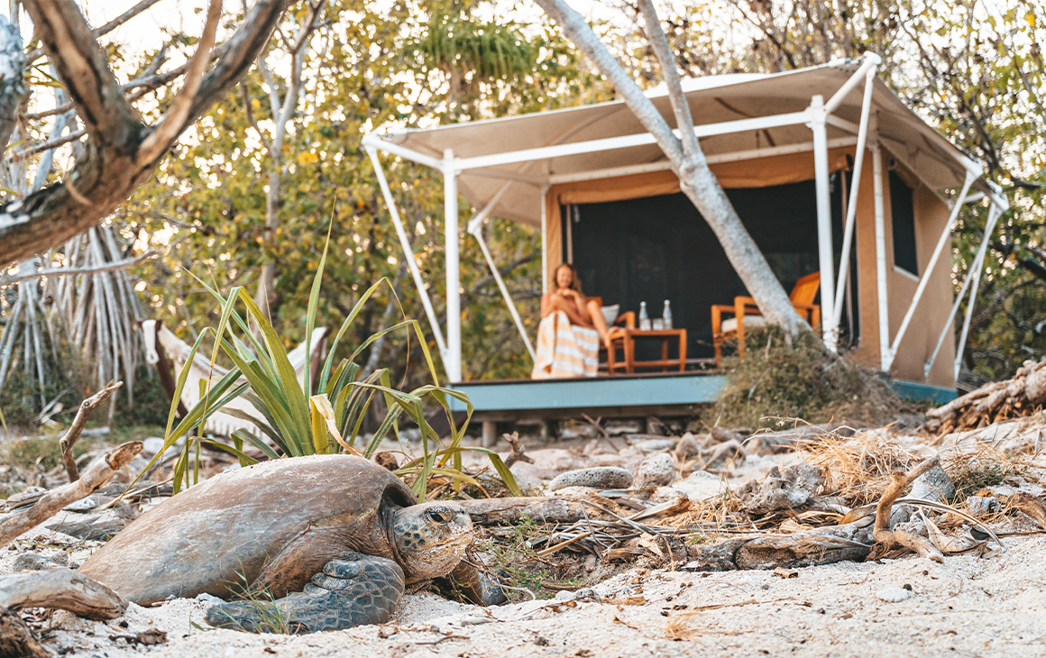 a woman siting in a glamping tent with a turtle on the sand in the foreground