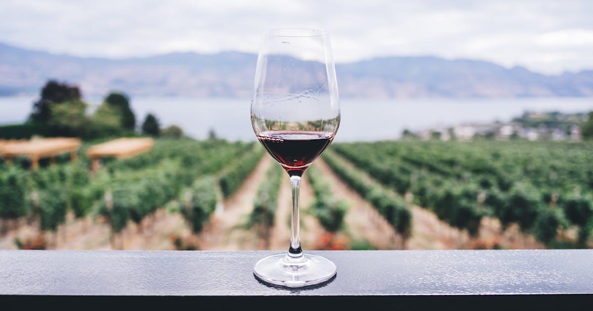 15 Stunning Wineries Within Driving Distance Of Brisbane Urban List Brisbane
